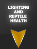 Lighting and Reptile Health